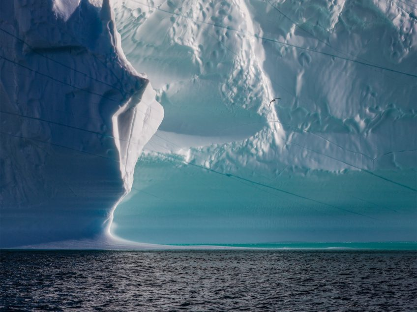 1 - diane-tuft-amidst-the-icebergs